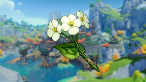 Genshin Impact: Flor chingxin, cómo y dónde encontrarla en todas sus ubicaciones