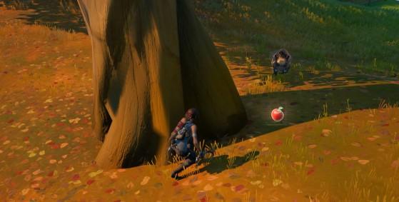 Atraído por la fruta, el jabalí se mueve mucho más lentamente. - Fortnite : Battle royale