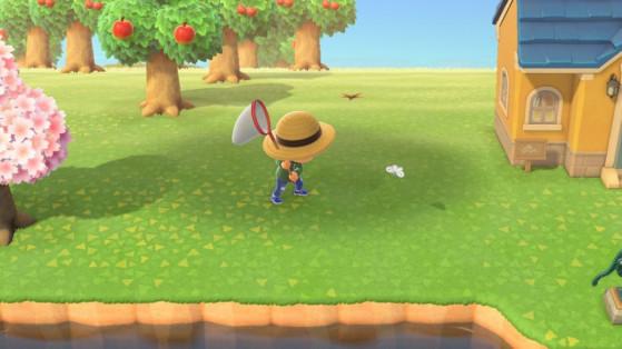 Animal Crossing New Horizons: lista de bichos de agosto para el hemisferio norte y sur